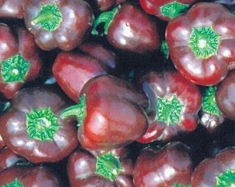 Hungarian miniature Schoko pepper, SWEET ! NON GMO !