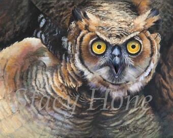 Owl Print- wildlife print - wildlife art - 11 x 14 - Free Shipping this Month