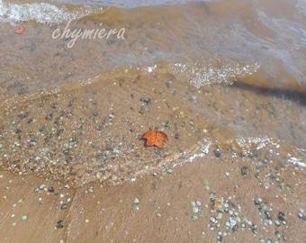 "Leaf & Laketide Photography Giclée Print. ""Alone""  Art Photo. Nature Photo.  Lakeshore. tide. ripples"