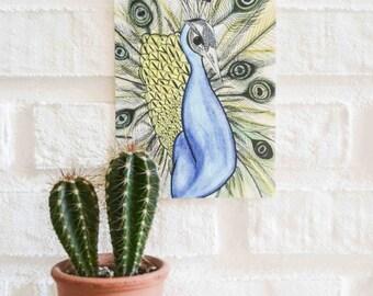 Peacock Illustration Postcard
