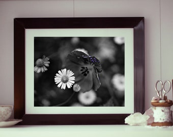Dew Drops on Daises - macro, floral photography print