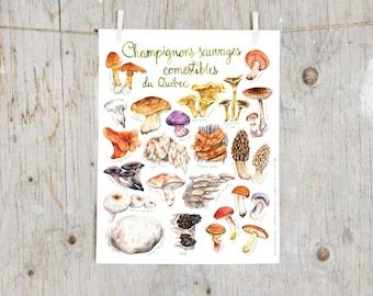 Print Edible Wild Mushroom | Mushroom print | Botanicals kitchen art, kitchen decor kitchen art | Educational English poster | Mycology gift