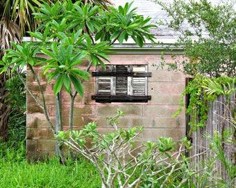 Pink House Photograph  Abandoned Pink House  Deserted House  Free US Shipping  MVMayoPhotography