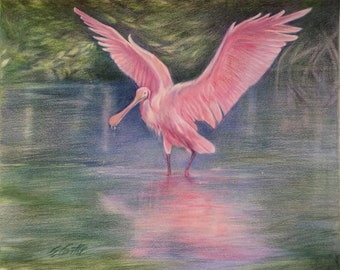 """Roseate Spoonbill Reflection - 17""""x14"""" - Color Pencil Drawing"""