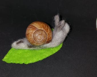 Large snail with real shell