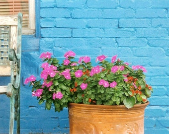 Bright Blue Brick Wall - Hot Pink Flowers and a Bench - Sidewalk Flowers - Original Matted Color Film Photograph by Suzanne MacCrone Rogers