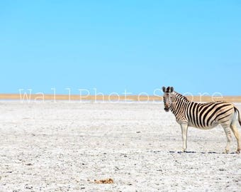 Animal Photography, Zebra in Moremi National Park Botswana, African Wildlife, Wild Nature Photography, African Photography, Nursery Wall Art