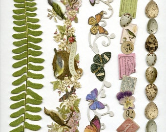 ADHESIVE BORDERS, Butterfly Borders, Floral Borders, Nature Borders, Die Cut Borders, Nature Adhesive Borders, Flora Fauna Adhesive Borders