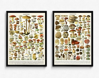 Mushroom Vintage Print Set of 2 (1) - Mushroom Poster - Mushroom Art - Home Decor - Home Art - Kitchen Art - Botanical - Larousse (VP1019)