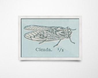 Cicada Print, Southern Print, Insect Print, Farmhouse Decor, Cicada PRINTABLE Art, Southern Decor, Farmhouse Wall Art