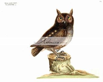 Antique Owl Art Illustration - Digital Download Printable Instant Art - Paper Crafts Scrapbook Altered Art - Brown Woodland Forest Owl Image
