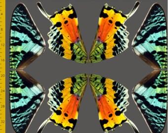 Rainbow Sunset Moth Fabric to Make Costume Wings - 100% Cotton Woven