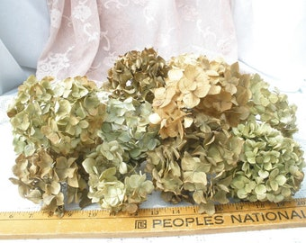 Dried hydrangea flowers- 20 short stemmed ivory/antique gold/brown/greenish flower heads- rustic floral supply-Farmhouse florals