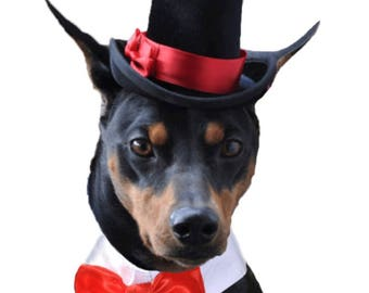 Dog Top Hat - The Aristocrat Top Hat for dogs and cats-your choice of ribbon color