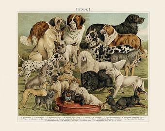 Dog Breeds Art Print - Vintage Dog Illustration - Animal Lover Wall Art Rescue Dog - Museum Quality