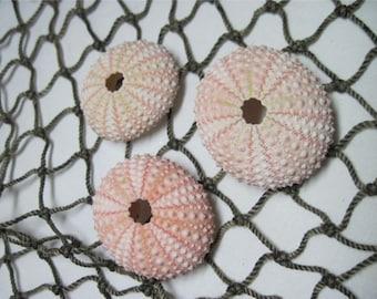 Beach Seashells Mini Sea Urchins Light Pink urchins natural specimens 208