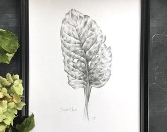 Swiss chard - original drawing