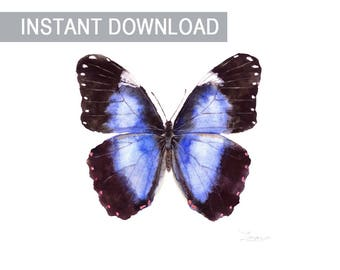 Butterfly wall art morpho achillaena blue Square watercolor JPG downable Instant download print Room decor digital file Hand painting image