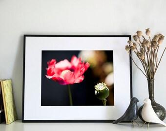 Poppy, Photographic Print, 11x14