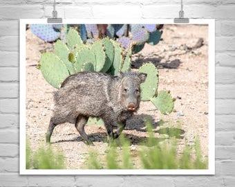 Javelina Picture, Arizona Desert Animal Print, Wildlife Photograph, Wild Pig, Javelina Photograph, Art on Canvas, Tucson Gift, Arizona Gift