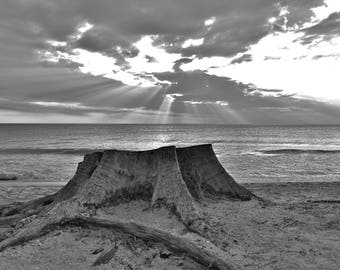"Black and White-High Res. ""Stump By The Ocean"" Picture Digital Download Jpeg"
