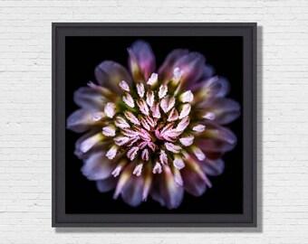 Pastel Flower - Photo Art framing floater