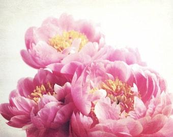 "Peony Print -  Floral Wall Art - Botanical Print - Pink Nursery Decor - Peony Flower Still Life - Pink Wall Art ""Peony Seven"""