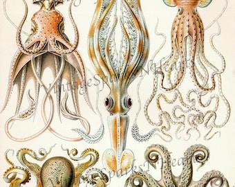 Vintage Squid Octopus Ocean Life Download Art Printable Image