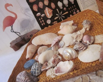 Sea Shells & Sand Dollars, Instant Nautical Collection in soft wicker basket, over 2 lbs., plus Shell ID sheet. Beach house cottage decor