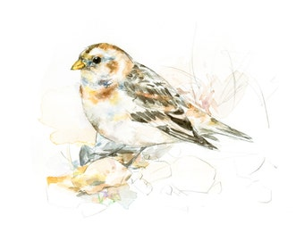 Snow Bunting watercolor painting - bird watercolor painting - 5x7 inch print - 0096
