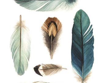 """6 Collected Feathers """"A"""" (teal blue tones) Watercolour Print - Feather Illustration - """"Collected Feathers"""" by Alicia's Infinity"""