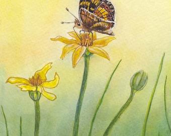 Skipper Butterfly~ Original Watercolor Fine Art Painting / Greeting card ~ by Heather Stinnett