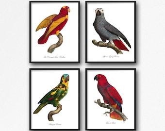 Bird Print Set Parrots, Parrot Botanical Print Set, Home Decor, Vintage Parrot Illustrations, Parrot Reproduction, Parrot 4 Print Set GR005