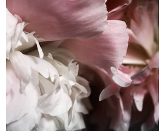 Nature Photograph - Peony Photograph - Flower Photograph - Spring - Blushing - Fine Art Photograph - Alicia Bock - Floral Art - Custom Print