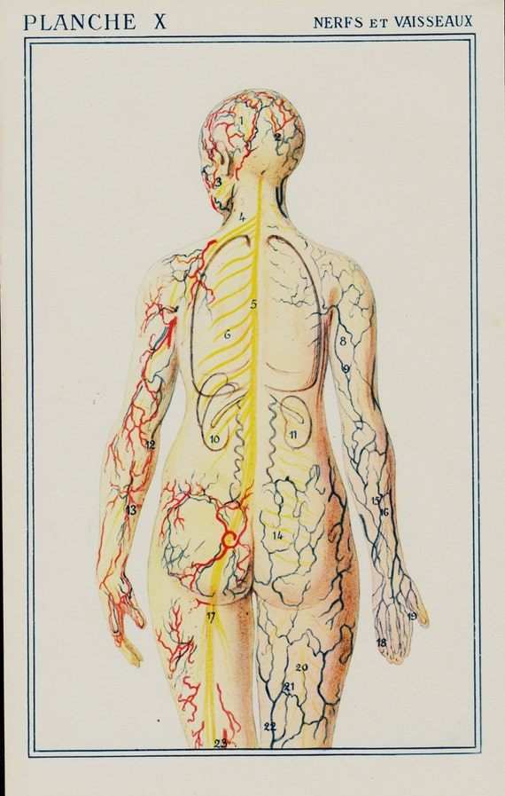 Increíble Tablas De La Anatomía Del Vintage Embellecimiento ...