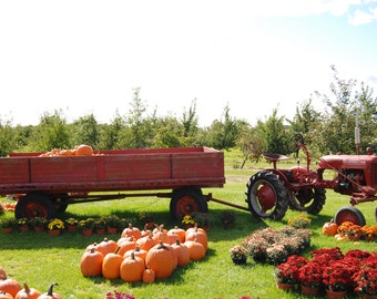 Tractor in the fall harvest
