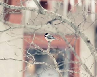 Chickadee Photography, Bird Photography, Bird Decor, Nature Photography, Chickadee Bird Print, Bird Art, Pink and Gray Art, Bird Wall Art