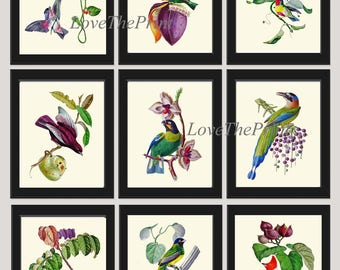 Bird Print Set of 9 Beautiful Antique Birds Flowers Berries Green Red White Blue Pink Purple Colorful Pretty Home Room Wall Decor to Frame