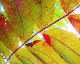Leaves of Summer
