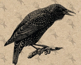 Vintage Retro drawing bird Crow Raven Instant Download Digital printable black and white clipart graphic fabric transfer burlap  HQ300dpi