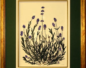 Original pressed lavender framed wall art