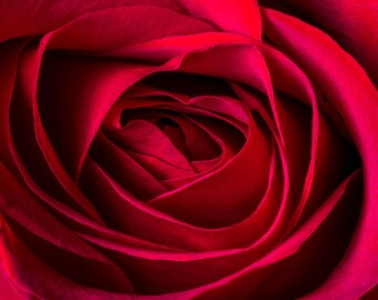 Red Rose Fine Art Photo, Flower, Wall Decor, Office Decor, Home Decor, Floral Wall Art Photograph