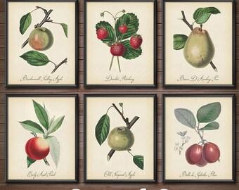 Vintage Fruit Print SET - Kohler Fruit Prints - Botanical Prints - Vintage Botanical Art - Kitchen Art - 2425