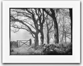 Limited Edition Print, Gate In The Fog, Black and White, Trees, Landscape