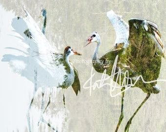 Crane photograph by Katlan Michalak, unframed