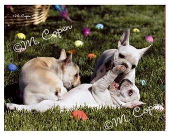 EASTER French Bulldog Cards - Easter Egg Cards  - Puppy Easter Cards - Set of 4 Cards