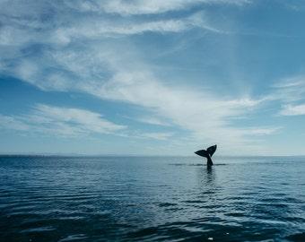 Whale Adventure Photo Print