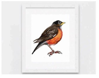 American Robin art print, Wall Art and Greeting Card. Printable art, Instant Download art by Artmagenta