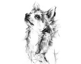 Chihuahua dog Drawing  - fine art dog print - Chihuahua gift