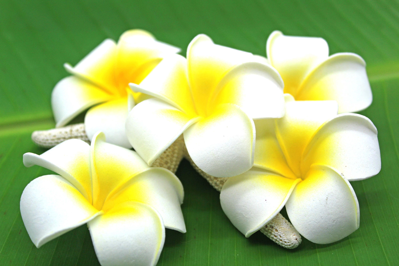 2.5 inch White Plumeria Foam Flower Beach Weddings Hula